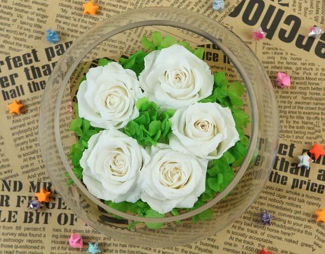 Tinh Khôi – Hoa hồng Magic LH5