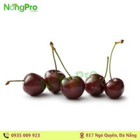 Cherry úc (100g)