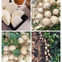 Hạt giống củ đậu Thái Lan