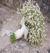 Hat giong hoa baby trang