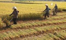 Máy gặt lúa cầm tay gia đình