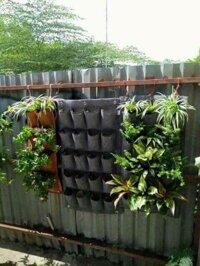 Sét túi vải 20 ngăn chuyên dụng trồng cây cảnh rau củ quả sạch treo tường ban công Set tui vai 20 ngan chuyen dung trong cay canh rau cu qua sah treo tuong ban cong