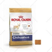 Thức ăn cho chó Royal Canin Chihuahua Junior - 500g, dành riêng cho Chihuahua từ 8 tuần - 8 tháng